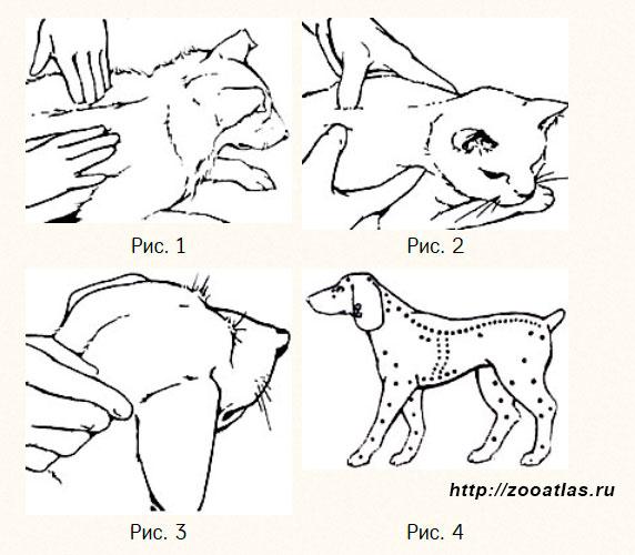 массаж для собаки и кошки