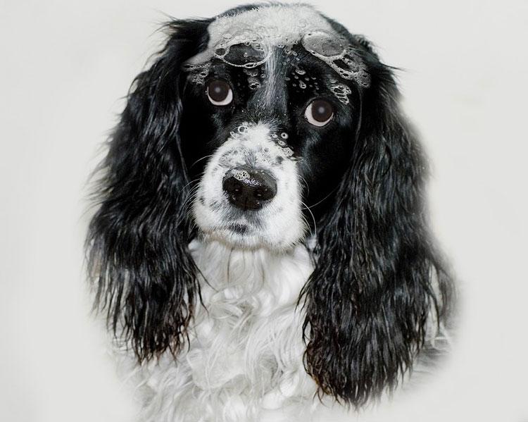 правила мытья собаки