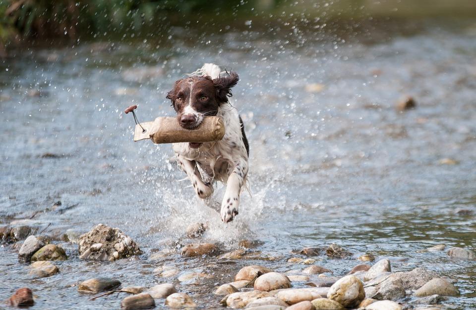 собака приносит из воды игрушку