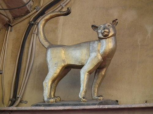 кошка Василиса в Петербурге