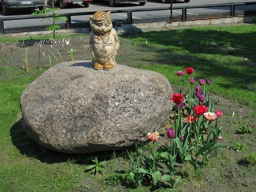 кот на кошачьем острове в Питере