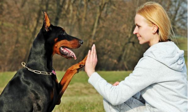 как познакомить собаку с маленьким ребенком
