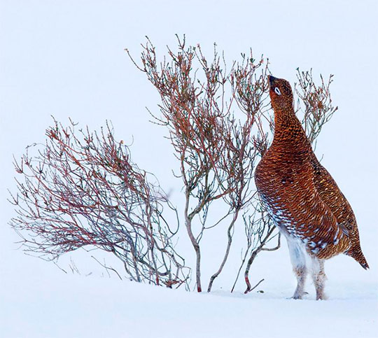 птица у куста зимой