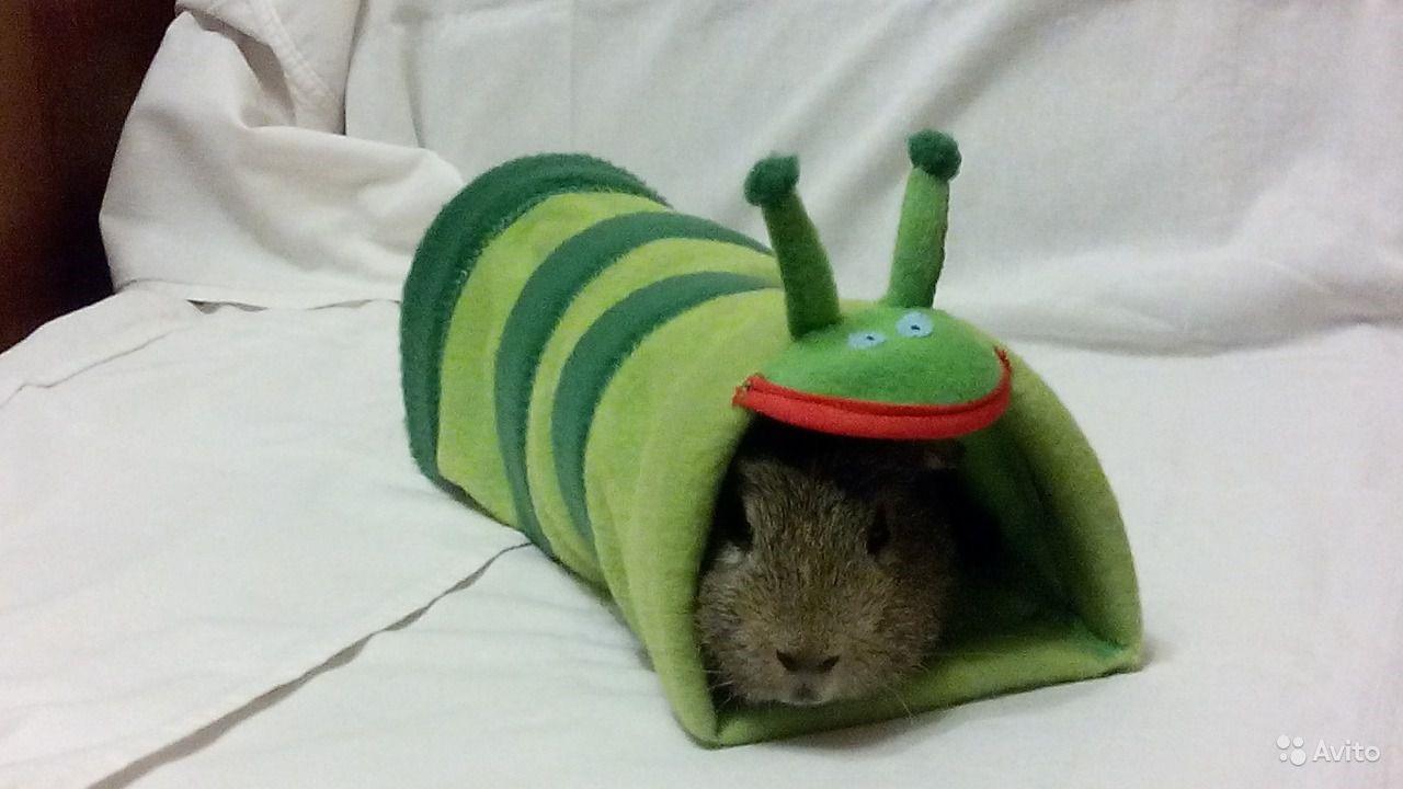 тоннели для морских свинок