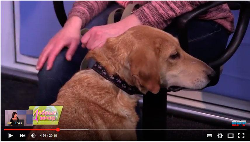 бездомная собака Девочка из Рыбинска
