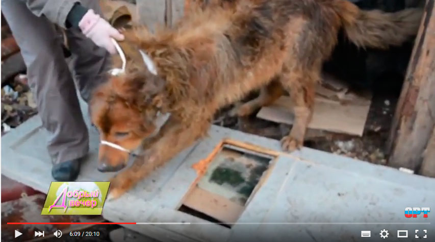 спасение собаки волонтерами в Рыбинске