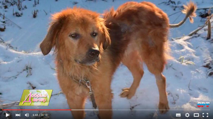 красивый бездомный пес