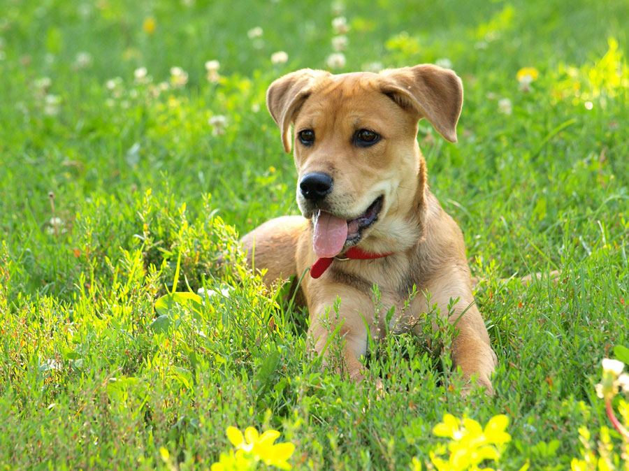как социализировать щенка