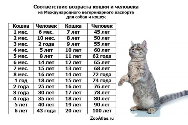 С какого возраста можно вязать кошек