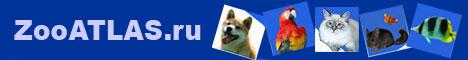ZooAtlas.ru — сайт о домашних животных