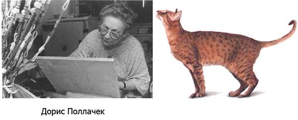 дорис поллачек и порода кошек ханаани