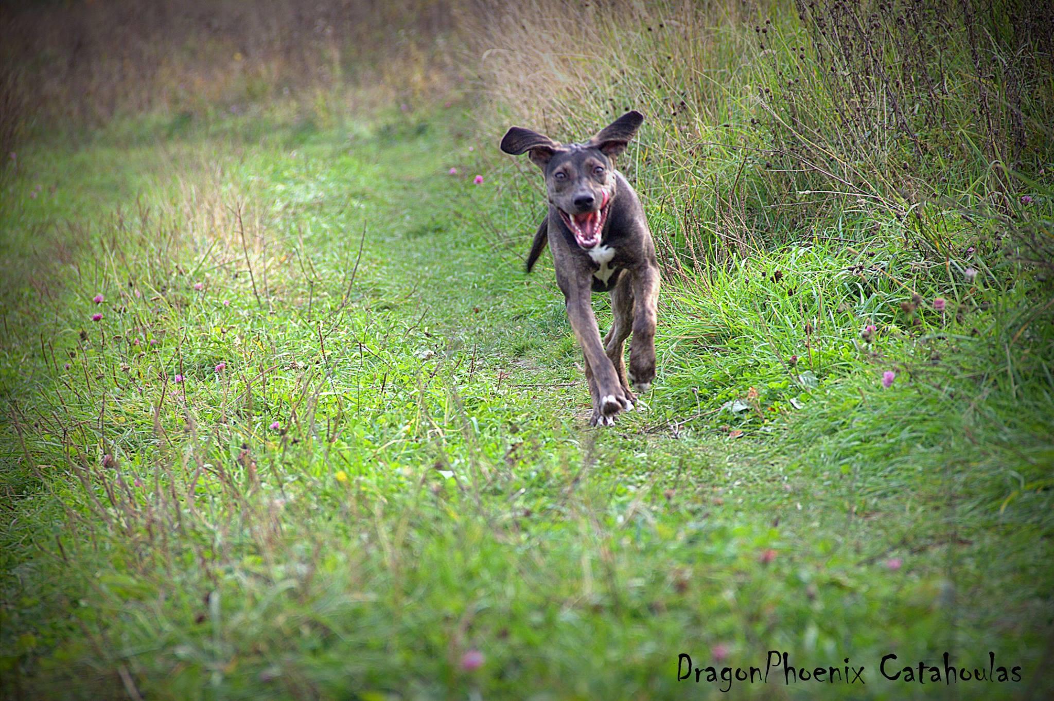 катахула охотник и пастушья собака