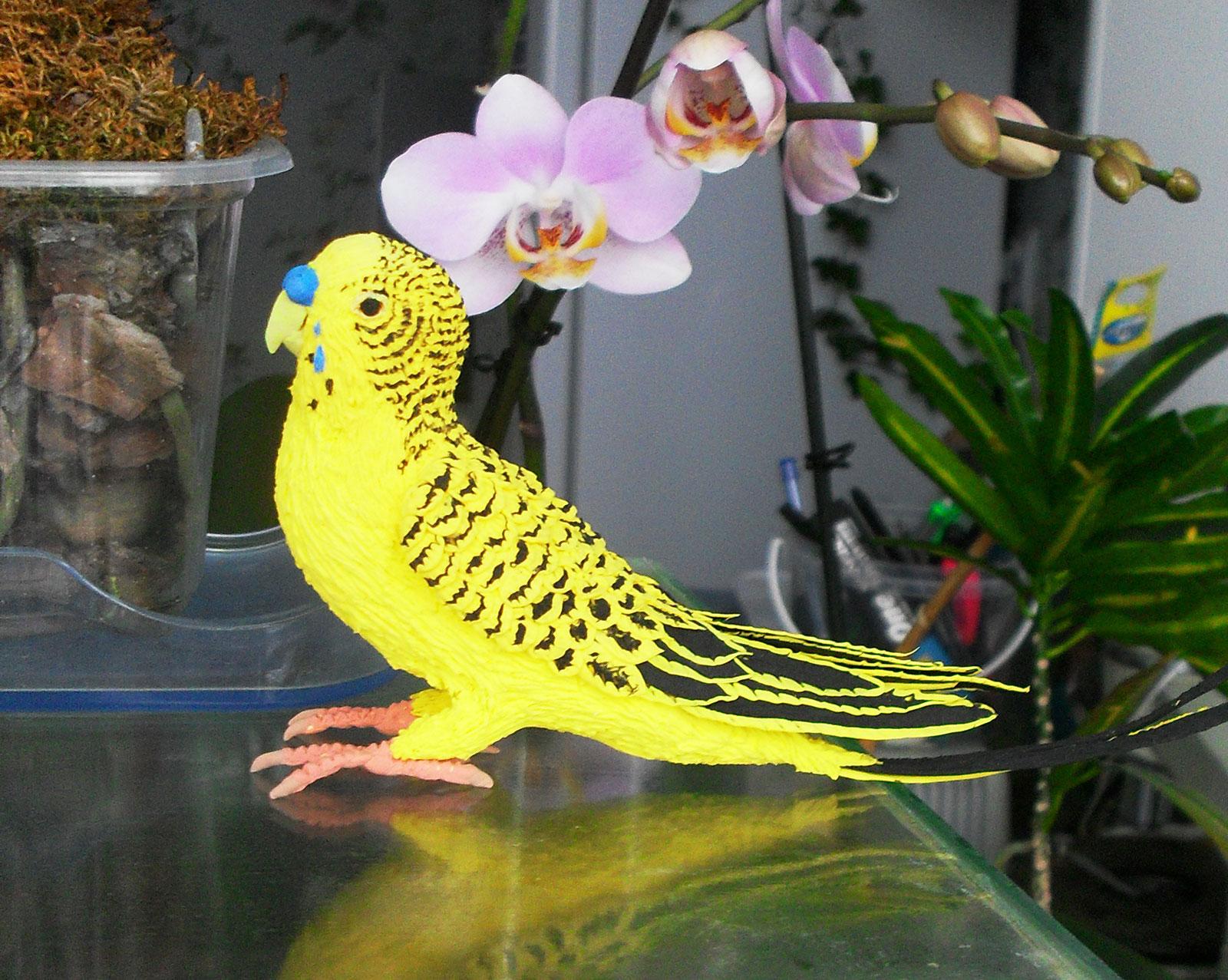 сувенир волнистый попугай из бархатного пластика