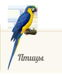 Атлас птиц ZooAtlas.ru