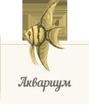 Атлас обитателей аквариума ZooAtlas.ru