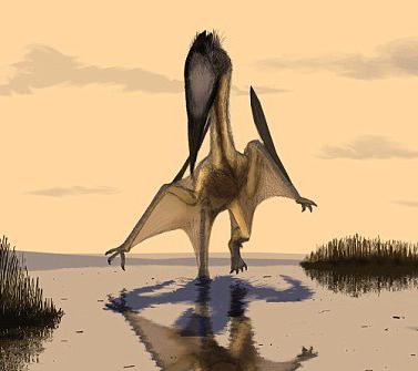 Птерозавр вида Lacusovagus, обитавший на Земле около 115 млн лет назад (иллюстрация Марка Уиттона)