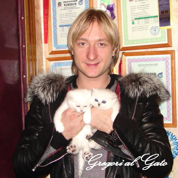 плющенко и кошка британская шиншилла