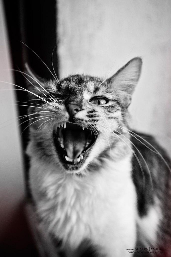 фотосъемка животных Агаева Джамила
