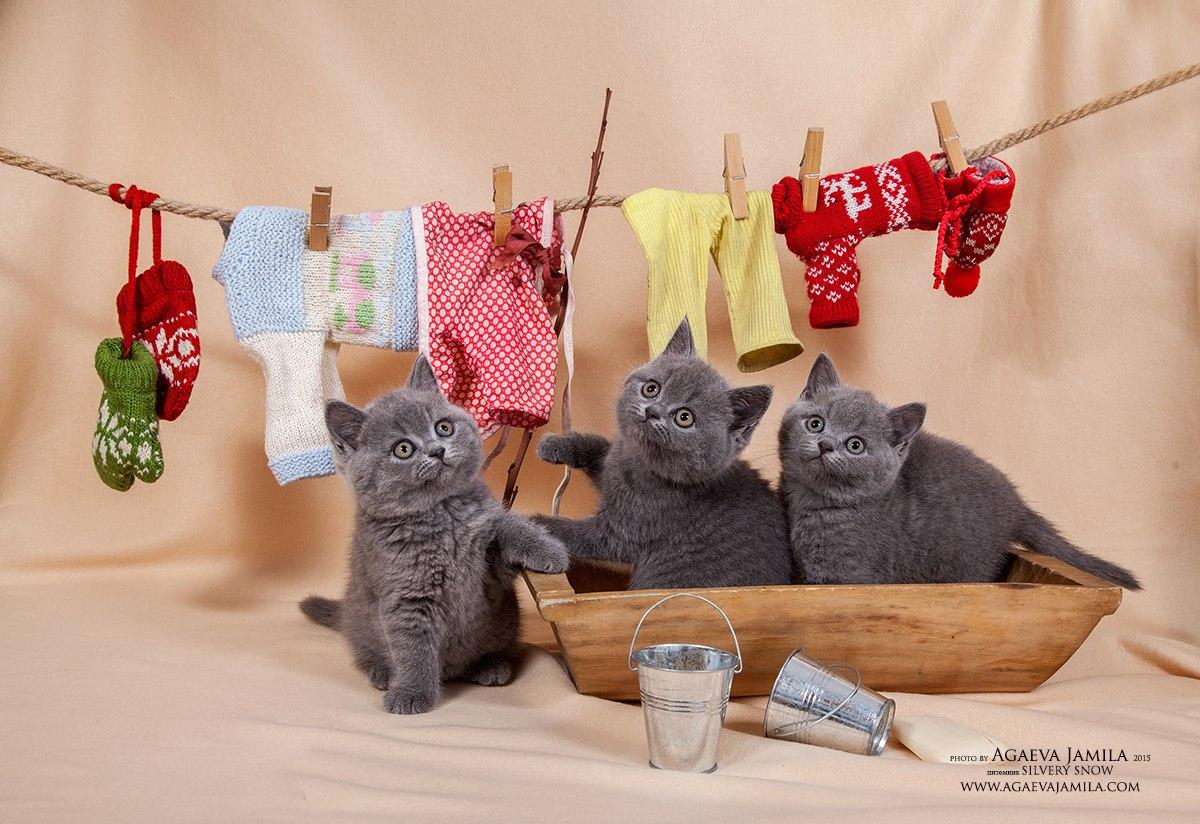 фотосъемка кошек и собак