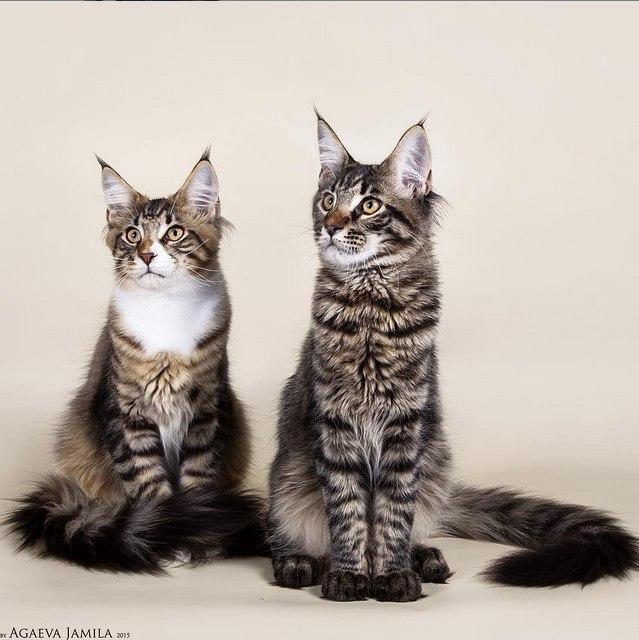 фотограф-анималист, съемка кошек в Москве