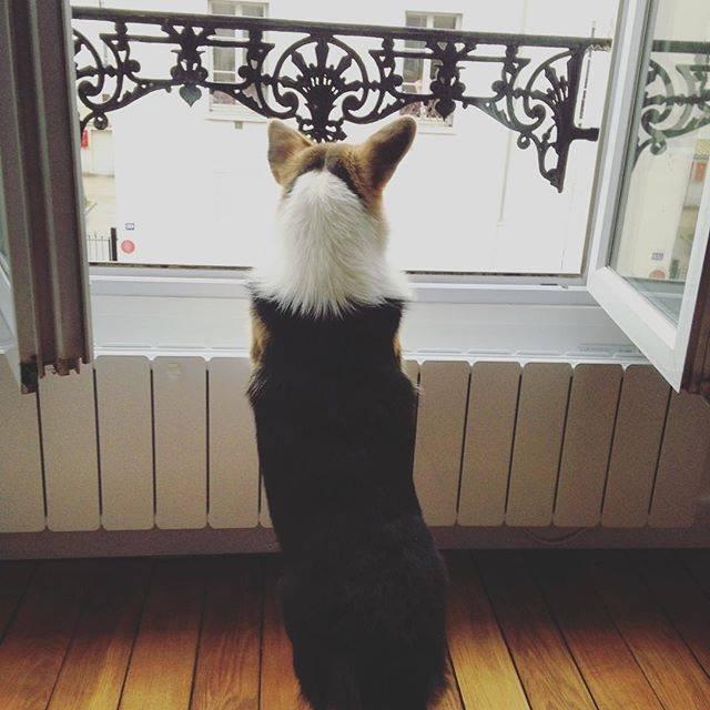 продвижение сайтов о собаках