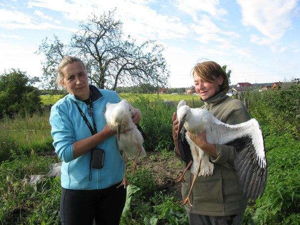 Светлана Санина и Вера Викторовна с аистятами