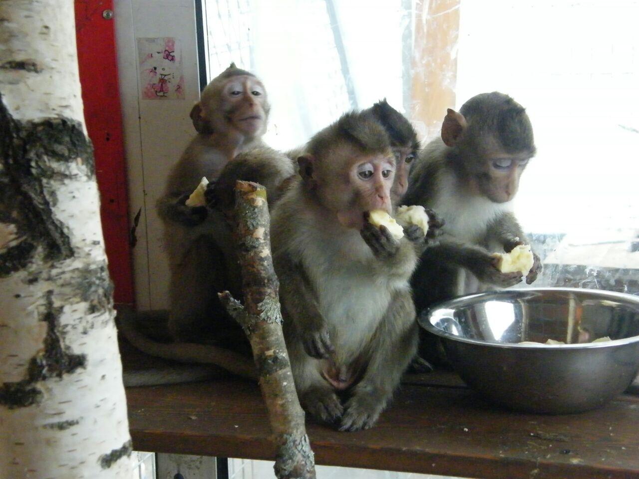 на таможне задержали обезьян