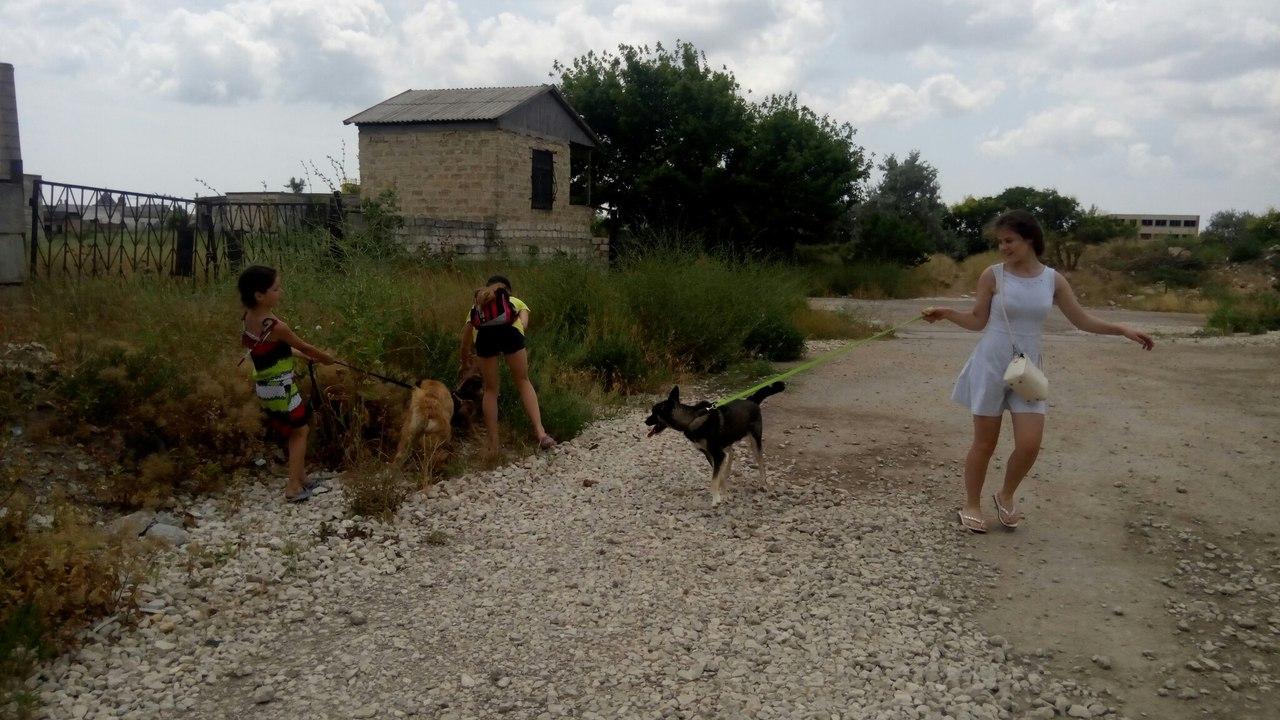 Волонтеры дети из Евпатории выгуливают собак