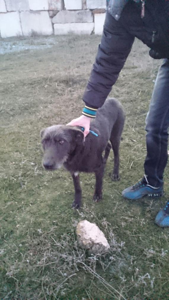 собака в Евпатории