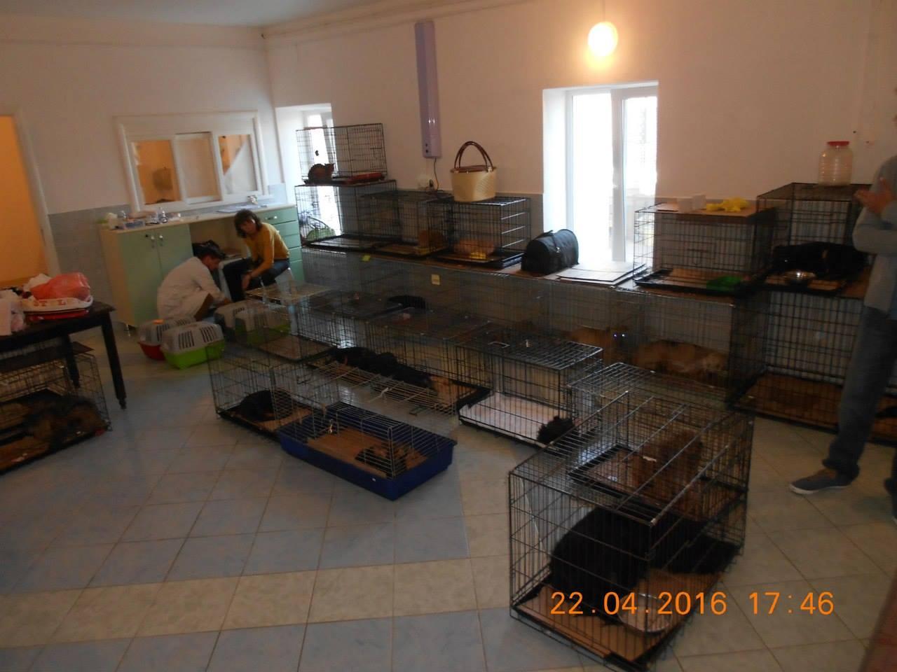 аукцион помощи животным