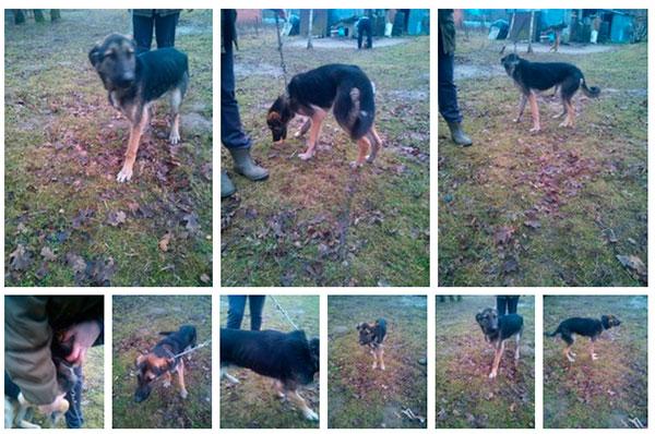 помощь собаке в Балтийске