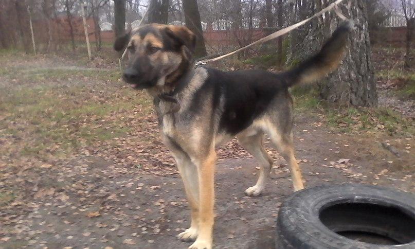собака из балтийска