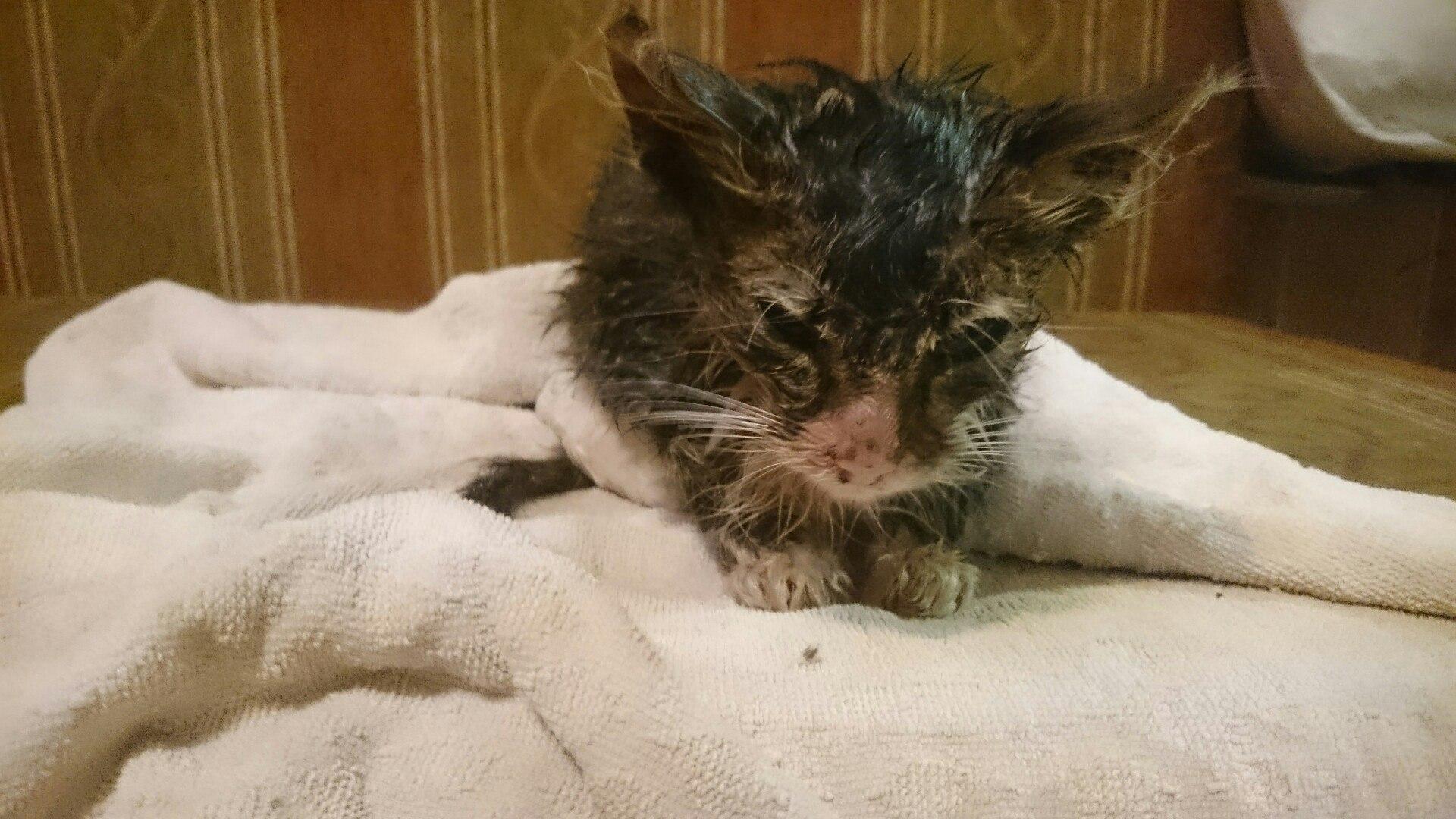 несчастный бездомный котенок