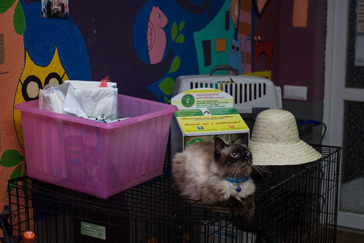 бездомный кот Сим из антикафе Котика хаус нашел дом