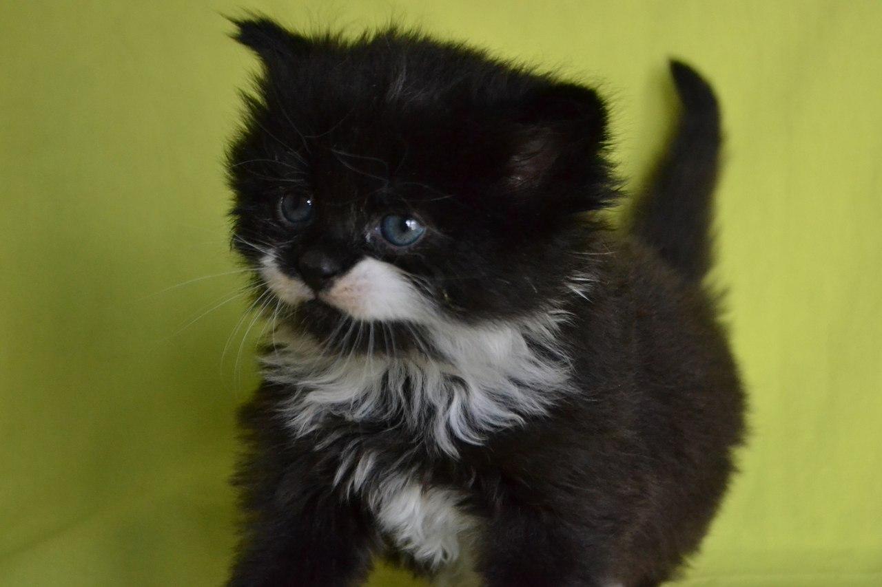 спасли котят в Светлогорске