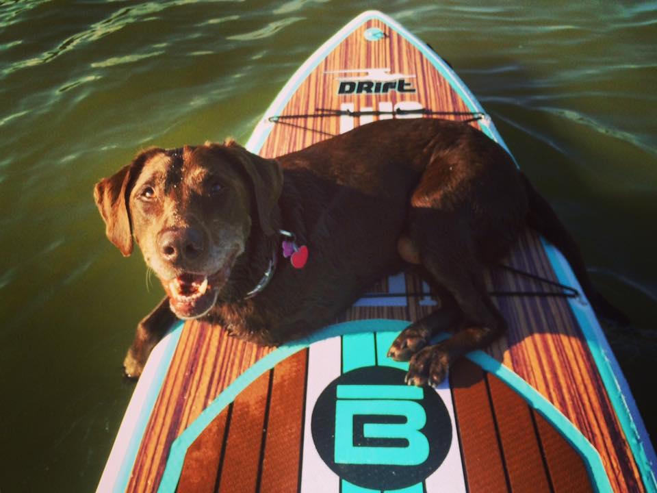 больная раком собака путешествует