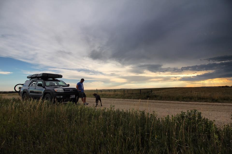 путешествие с больной собакой на машине