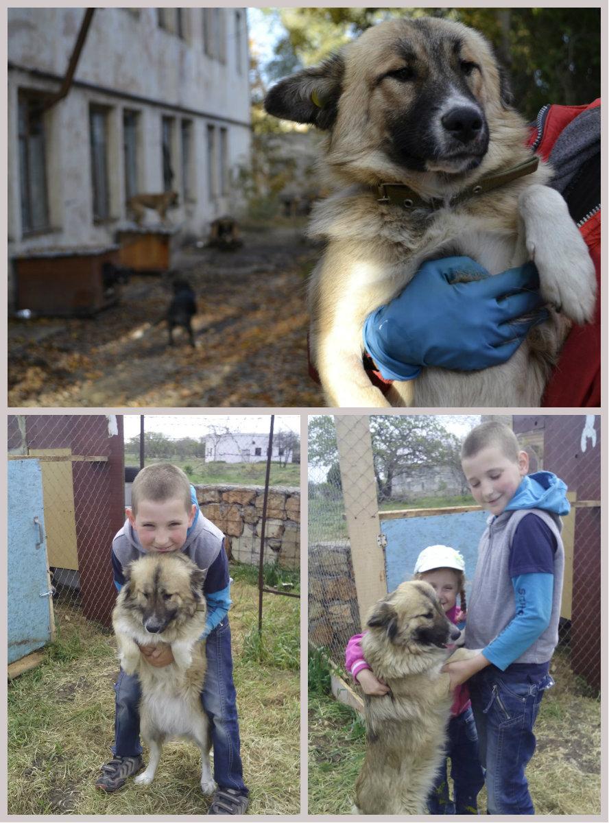 слепая собака Мира из Евпатории
