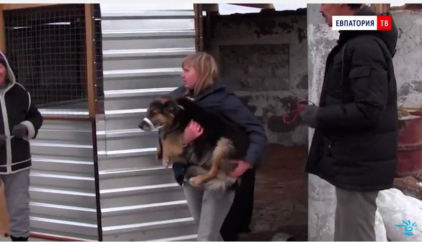 зоозащитники спасают животных