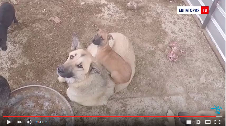 неагрессивные собаки