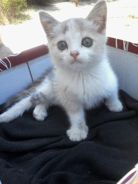 котенок с парализованными лапками