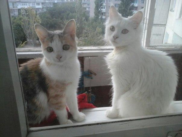 котенок вырос в красивую кошку