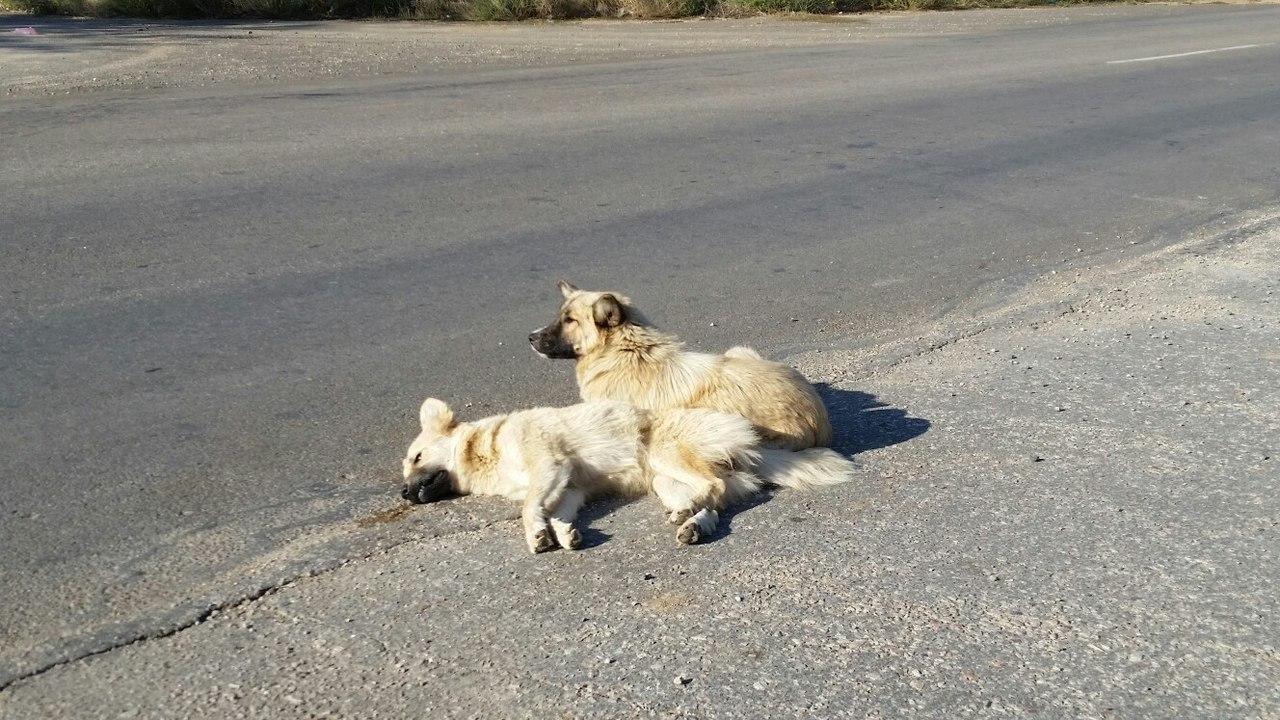 слепая Мира возле сбитого машиной брата
