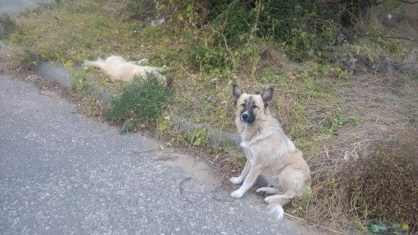 собака не уходит от своего умершего брата