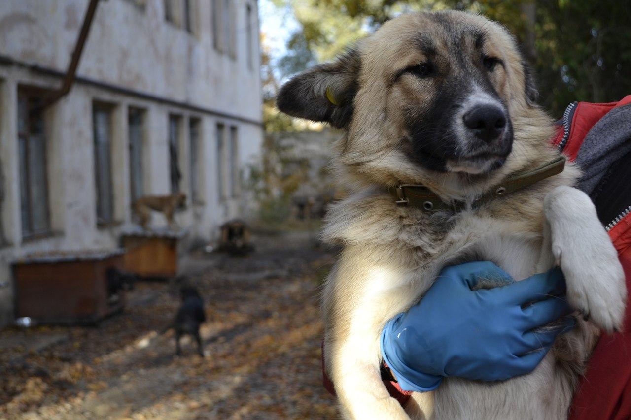 Фонд помощи бездомным животным ищет дом для собаки
