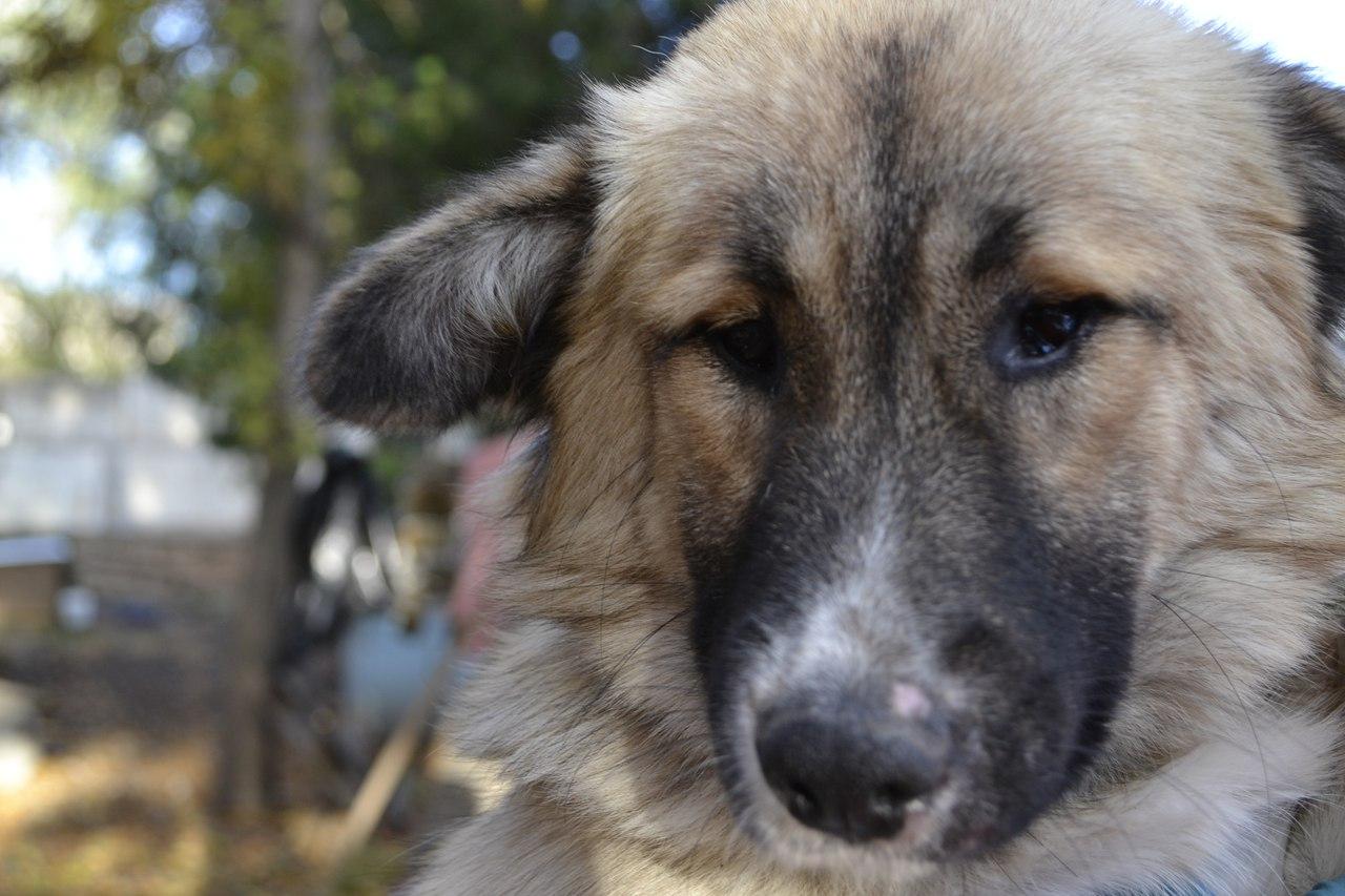 бездомная собака ищет дом