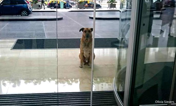бездомная собака ждет стюардессу
