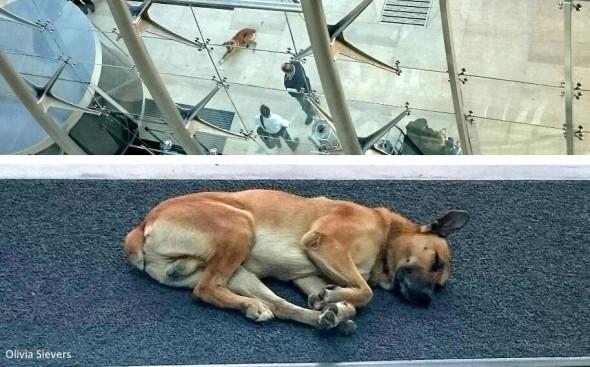 Бездомная собака ждет в отеле