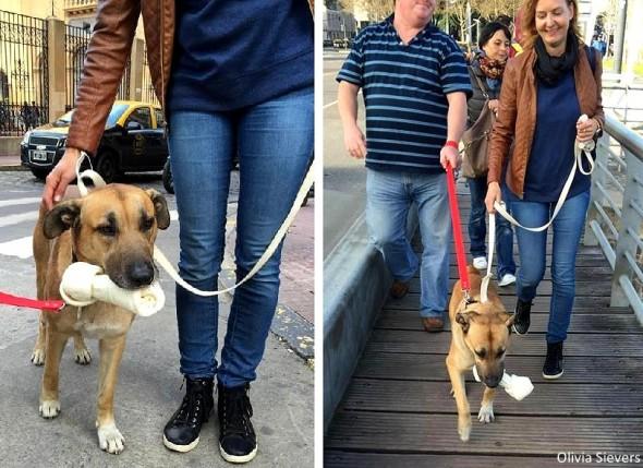 бездомную собаку из Аргентины забрали в Германию
