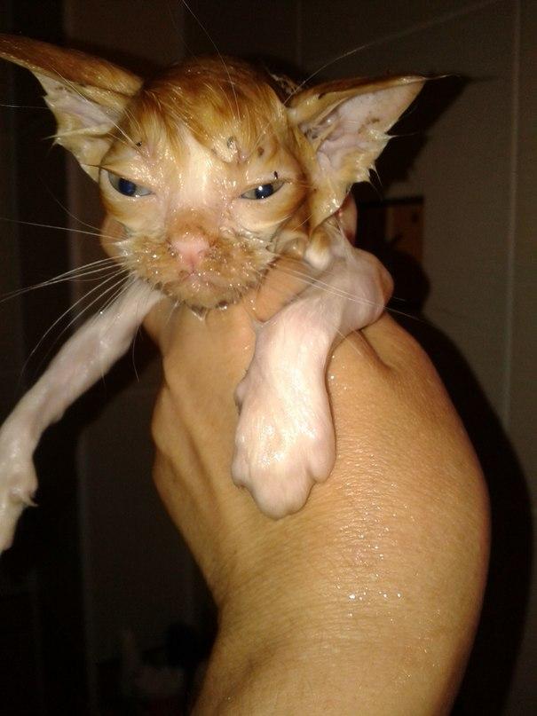 искупали бездомного котенка
